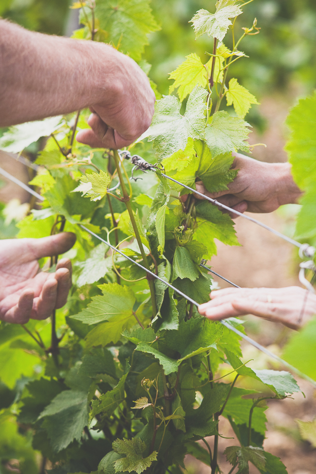 Viticulture Sainchargny